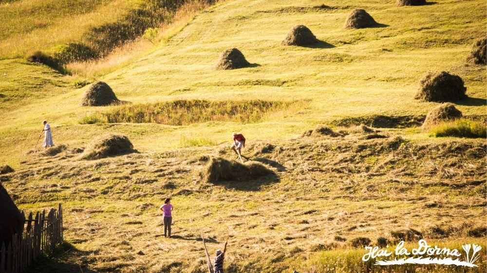 Satul bucovinean: oameni muncind la fân în Călinești, Dorna Arini