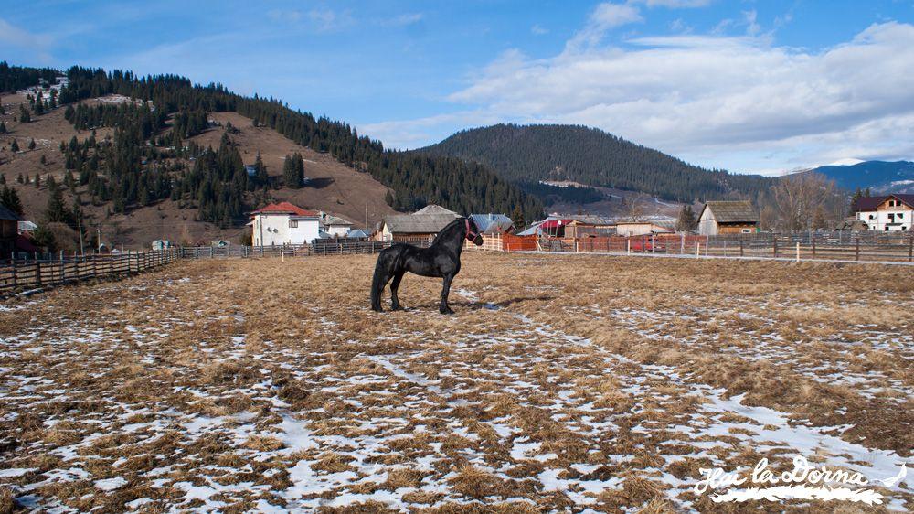 Caii Bucovinei