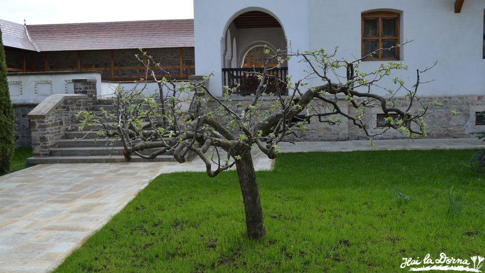 Curte verde și bine îngrijită în incinta mănăstirii Putna