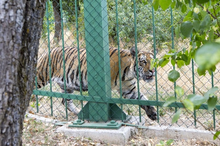 Grădina Zoologică din Rădăuți
